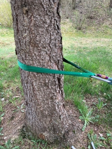 single point anchor on a tree